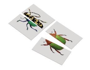 układanka Montessori przedszkole chrząszcze
