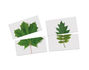 układanka Montessori liście