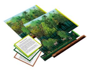 zestaw edukacyjny Montessori warstwy lasu