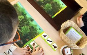 karty montessori kontrola błędu