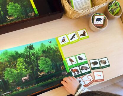 pomoc Montessori warstwy lasu