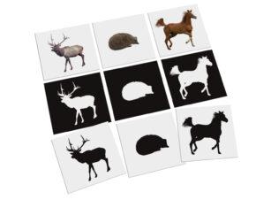 karty Montessori cienie zwierzęta
