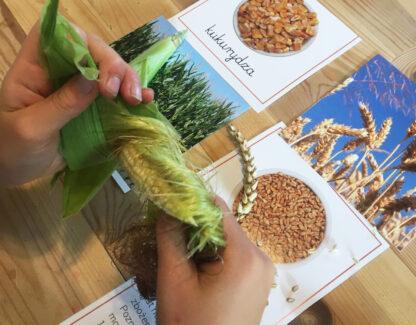 pomoc Montessori Zboża