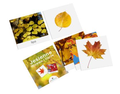 karty Montessori drzewa liście
