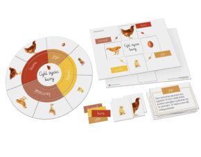 Cykl życia kury